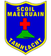 About Scoil Maelruain Junior